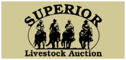 Superior Tallgrass Yearling Auction