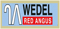 Wedel Red Angus