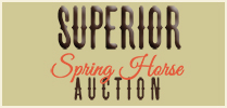Superior Spring Horse Auction