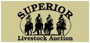 Superior Livestock Sheep Auction <br> Hudson Oaks, TX